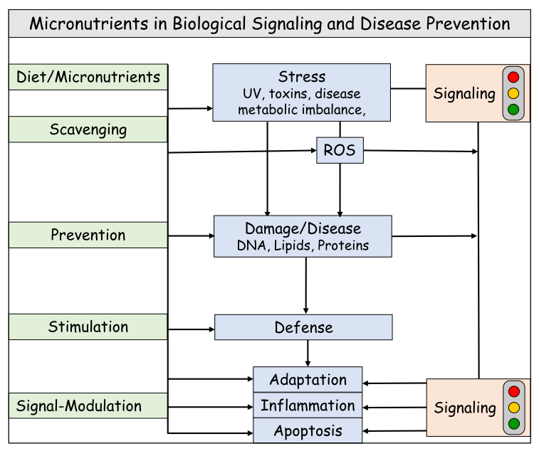 Micronutrients in signalling and disease prevention (Group Stahl)